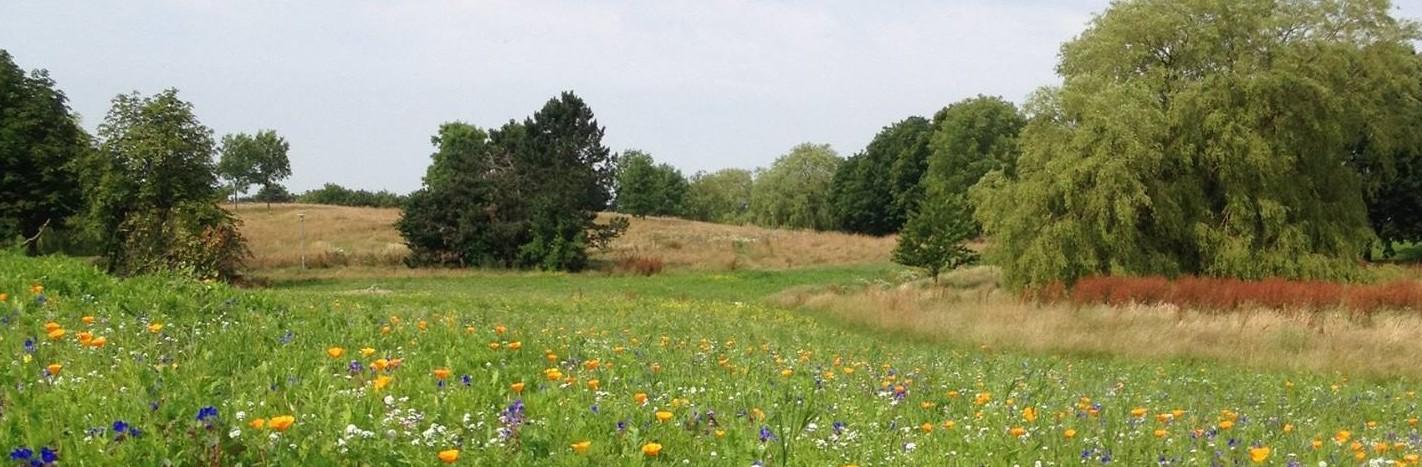 Lystrup Kogræsser- og Naturplejeforening